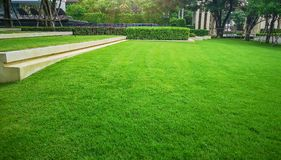 Smooth and fresh green grass lawn as a carpet in garden backyard, good care maintenance landscapes decorated with flowering plant