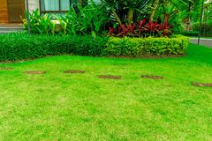 Smooth fresh green grass lawn with random pattern walkway of brown laterite stepping stone in a garden of flowering plant stock photo
