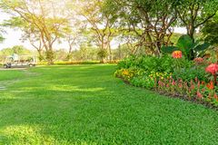 Smooth green grass lawn in good care maintenance garden, flowering plant, shurb and trees on backyard under morning sunlight