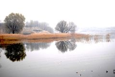 Smooth lake reflected tree in the winter stock photography