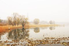 Smooth lake reflected tree in the winter stock image