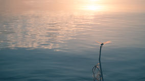 Smooth landscape of lake. Royalty Free Stock Images