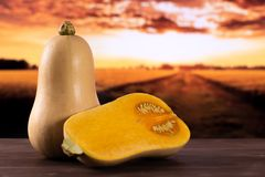 Smooth pear shaped orange butternut squash waltham with autumn field behind. Group of one whole one half of smooth pear shaped orange butternut squash waltham stock images