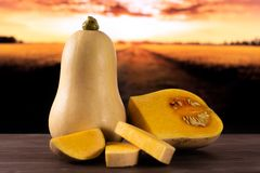 Smooth pear shaped orange butternut squash waltham with autumn field behind. Group of one whole one half three slices of fresh smooth pear shaped orange stock photography