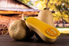 Smooth pear shaped orange butternut squash waltham with cart. Group of two whole one half of smooth pear shaped orange butternut squash waltham variety with cart royalty free stock photos
