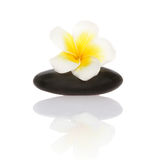 Smooth pebble and frangipani flower Stock Photography