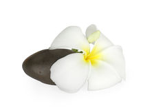 Smooth pebble and frangipani flower. On white background Royalty Free Stock Photos