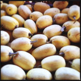 Smooth round white gourds Stock Photography