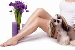 Beautiful slender female legs with silky skin, hair removal, depilation, shugaring, underwear. Little shih-tzu. Smooth and silky female feet. Depilation Royalty Free Stock Photos