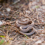 Smooth snake Royalty Free Stock Images