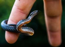 Smooth snake royalty free stock image