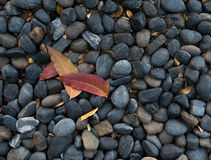 Smooth stones and leaf Royalty Free Stock Photos