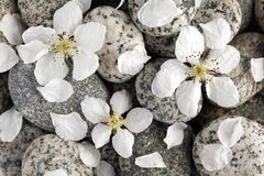 Smooth stones with petals stock photo