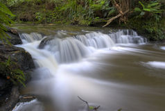 Smooth stream. In New Zealand Stock Photos