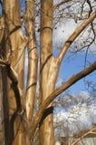 Smooth tree Stock Photo