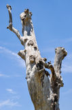 Smooth Tree Trunk in the Sky: Rock Pigeon House Stock Image