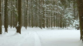 Smooth walking in winter forest. Clean and frosty daytime stock footage