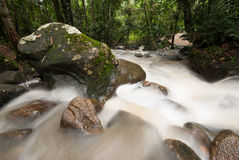 Smooth waterfall in forest Royalty Free Stock Photo