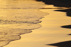 Gold Evening Stock Image