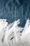 Smooth white feather Stock Photography