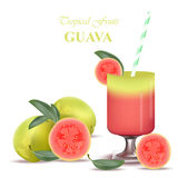 Smoothie Guava Vector exotic fruits cocktail Royalty Free Stock Photography