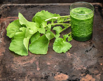 Smoothy saudável das folhas verdes frescas do rabanete Alimento do vegetariano detox Fotos de Stock