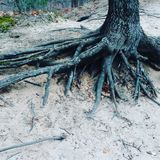 Smothered roots royalty free stock images