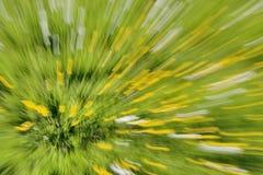 Smörblommor i ett fält - abstrakt zoomande bakgrund Royaltyfri Fotografi