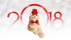 Smsa den magiska ljust rödbrun katten för 2018 jul med den röda hatten Arkivbilder