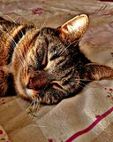Tabby cat sleep. And smugly basking in the sunlight. Content, sleeping, snoozing, snoring, zzz, purring, kitty Stock Image