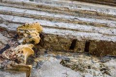 Smula mausoleumväggen med vattenkastaren som skyddar den, som en texturerad bakgrund royaltyfri fotografi