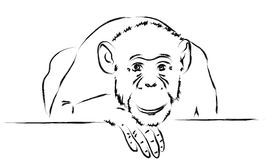 Smutna małpa stawia jej głowę na łapie Obrazy Stock