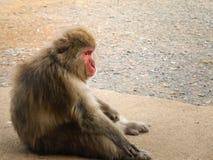 Smutna małpa Obraz Stock