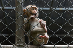 Smutna małpa w klatce Zdjęcia Stock