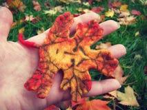 Smutna twarz jesień liść Obraz Stock