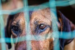 Smutni oczy pies przez kratownicy obrazy royalty free