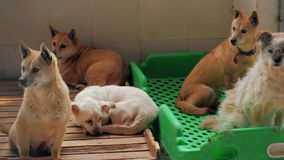 Smutni psy w schronieniu za płotowym czekaniem ratować i adoptującym nowy dom Schronienie dla zwierzęcia pojęcia zbiory