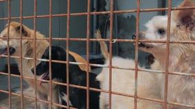 Smutni psy w schronieniu za płotowym czekaniem ratować i adoptującym nowy dom Schronienie dla zwierzęcia pojęcia zdjęcie wideo