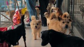 Smutni psy w schronieniu za płotowym czekaniem ratować i adoptującym nowy dom Schronienie dla zwierzęcia pojęcia zbiory wideo