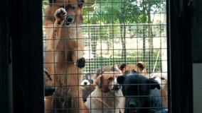 Smutni psy w schronieniu za p?otowym czekaniem ratowa? i adoptuj?cym nowy dom Schronienie dla zwierz?cia poj?cia zdjęcie wideo