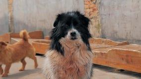 Smutni psy w schroniskowym czekaniu ratować i adoptującym nowy dom Schronienie dla zwierzęcia pojęcia zbiory