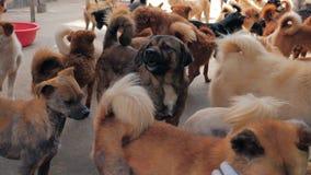 Smutni psy w schroniskowym czekaniu ratować i adoptującym nowy dom Schronienie dla zwierzęcia pojęcia zdjęcie wideo
