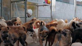 Smutni psy w schroniskowym czekaniu ratować i adoptującym nowy dom Schronienie dla zwierzęcia pojęcia zbiory wideo