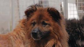 Smutni psy w schroniskowym czekaniu ratowa? i adoptuj?cym nowy dom Schronienie dla zwierz?cia poj?cia zbiory wideo