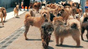 Smutni psy w schroniskowym czekaniu ratowa? i adoptuj?cym nowy dom Schronienie dla zwierz?cia poj?cia zbiory