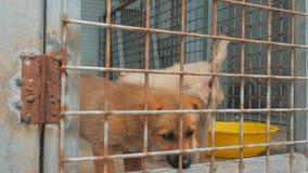 Smutni szczeniaki w schronieniu za płotowym czekaniem ratować i adoptującym nowy dom Schronienie dla zwierzęcia pojęcia zbiory wideo