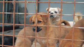 Smutni szczeniaki w schronieniu za płotowym czekaniem ratować i adoptującym nowy dom Schronienie dla zwierzęcia pojęcia zbiory