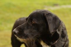 Smutny czarny pies Zdjęcia Royalty Free
