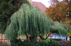 Smutny drzewo Zdjęcia Royalty Free