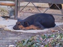 Smutny i osamotniony pies kłaść puszek na ziemi obrazy stock